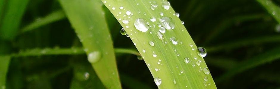 從天然草本植物製成